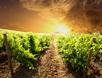 vineyards with history